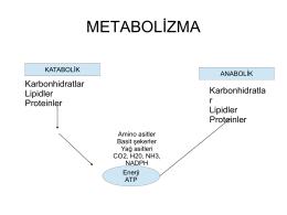 metabolik olaylar-22 nisan 2014