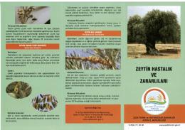 zeytin hastalık ve zararlıları - Aydın İl Gıda Tarım ve Hayvancılık