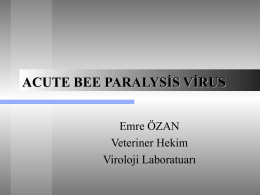akut bee paralysis virus
