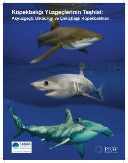 Köpekbalığı Yüzgeçlerinin Teşhisi:
