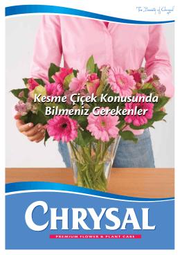 Kesme Çiçek Konusunda Bilmeniz Gerekenler Kesme Çiçek