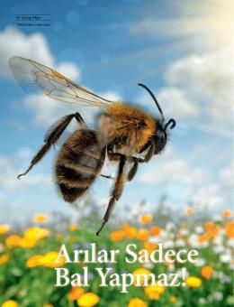 Arılar Sadece Bal Yapmaz