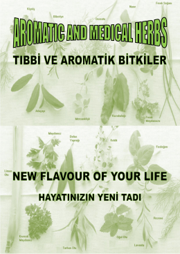 Untitled - New LifeFlavour