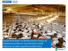 Broylerlerde Biotin ile Birlikte Verilen Protein ile
