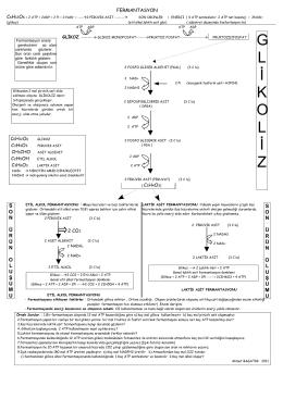 GENEL OLARAK O2 SİZ SOLUNUM C6H12O6 + 2 ATP----à2
