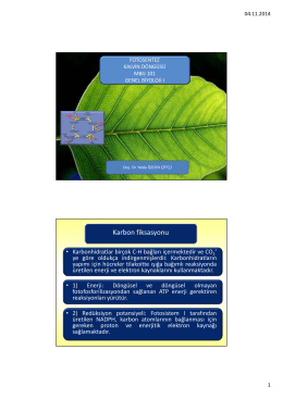 MBG 111 Biyoloji I Kalvin Dongusu (1,9 MB)