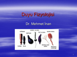 Duyu Fizyolojisi - Op. Dr. Mehmet İnan