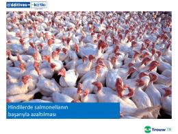 Hindilerde salmonellanın başarıyla azaltılması