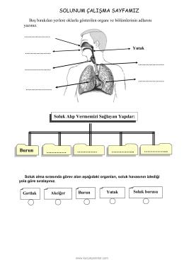 solunum çalışma sayfası
