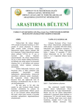 FARKLI YAŞTAKİ KIZILÇAM (Pinus brutia Ten.)