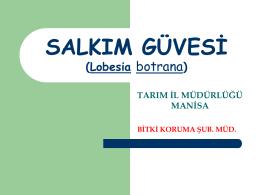 SALKIM GÜVESİ (Lobesia Botrana)