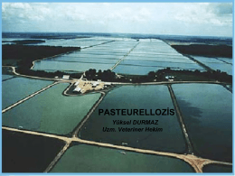 fısh pasteurellosıs
