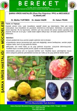 Şarka Virüs Hastalığı - TC Gıda Tarım ve Hayvancılık Bakanlığı