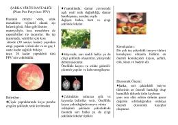 Şarka Virüsü Hastalığı - Ankara İl Gıda Tarım ve Hayvancılık