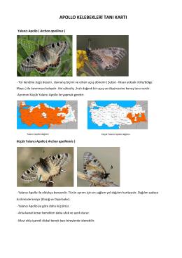 apollo kelebekleri tanı kartı