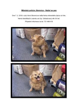 Městská policie Jilemnice - Našel se pes
