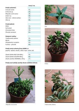 Rhipsalis coral cactus 28