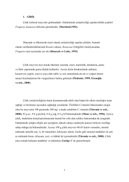 Çilek tezi - BahceBitkileri.org