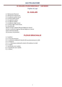 el kasları & plexus brachıalıs lab indeks-pdf