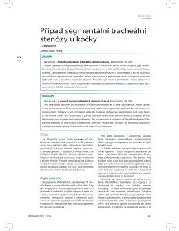 Případ segmentální tracheální stenózy u kočky