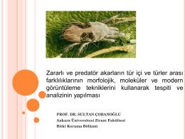 Zararlı ve predatör akarların tür içi ve türler arası