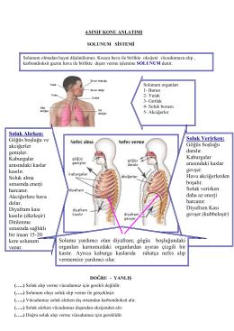 Soluk Verirken: Göğüs boşluğu daralır. Kaburgalar arasındaki kaslar