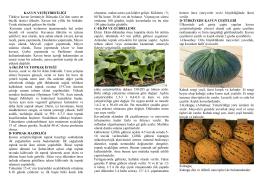 Kavun Yetiştiriciliği - Ankara İl Gıda Tarım ve Hayvancılık Müdürlüğü