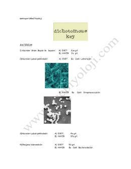 samiuyar/akbal/biyoloji BACTERĐUM 1) Hücreler Gram Boyası ile