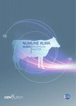 Numune Alma Rehberi
