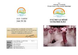 Etçi Beyaz Hindi Yetiştiriciliği - Ankara İl Gıda Tarım ve Hayvancılık