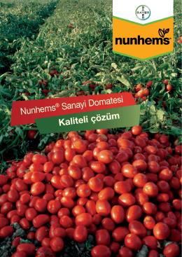 Nunhems ® Sanayi Domatesi Kaliteli çözüm