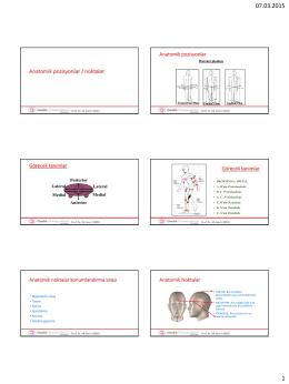 Anatomik pozisyonlar / noktalar