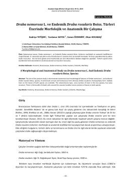 Draba nemorosa L. ve Endemik Draba rosularis Boiss. Türleri