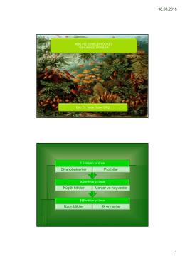 Uzun bitkiler İlk ormanlar Küçük bitkiler Mantar ve hayvanlar
