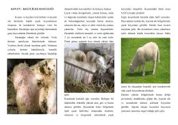 Koyun-Keçi Çiçek Hastalığı - Kütahya İl Gıda Tarım ve Hayvancılık