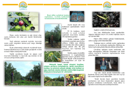 Zeytin Liflet - Osmaniye İl Gıda Tarım ve Hayvancılık Müdürlüğü