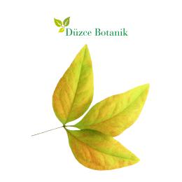 Broşür - Düzce Botanik Peyzaj