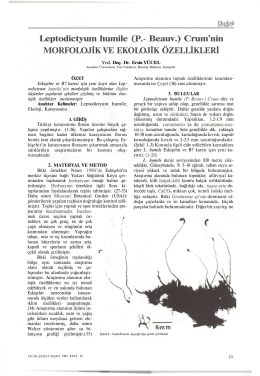 Leptodictyum humile (P.- Beauv.) Crum`nin MORFOLOJİK
