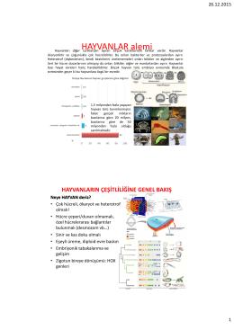 HAYVANLAR alemi - Biyoloji Bölümü