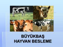 BÜYÜKBAġ HAYVAN BESLEME
