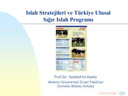 Islah Programı - istanbul manda