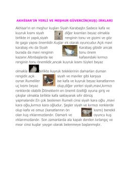 Akhisar`ın en meşhur kuşları Siyah Karabaştır.Sadece kafa ve