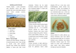 Tritikale - Kütahya İl Gıda Tarım ve Hayvancılık Müdürlüğü
