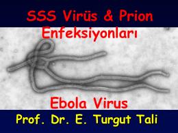 SSS Virüs & Prion Enfeksiyonları Ebola Virus