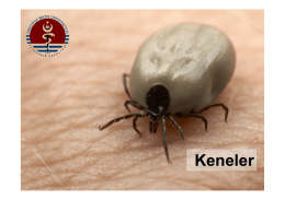 KENELER (Ticks) - UzmanVeteriner.Com.tr | Uzman Veteriner