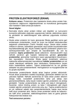 PROTEİN ELEKTROFOREZİ (İDRAR)