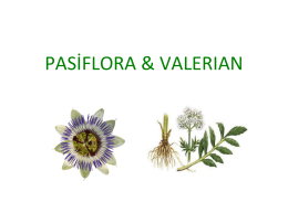 pasiflora & valerıan