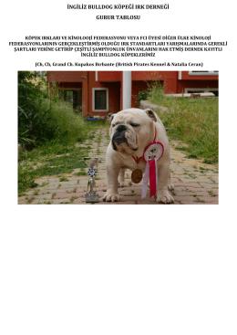 ingiliz bulldog köpeği ırk derneği gurur tablosu
