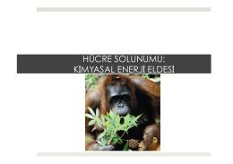 9. Hücre Solunumu-Kimyasal Enerji Eldesi.pptx