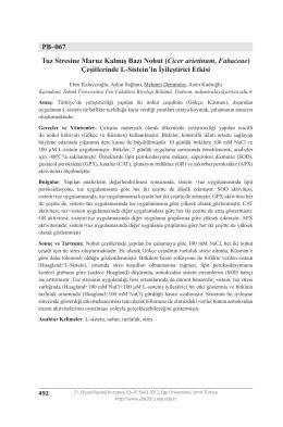 PB–067 Tuz Stresine Maruz Kalmış Bazı Nohut (Cicer arietinum